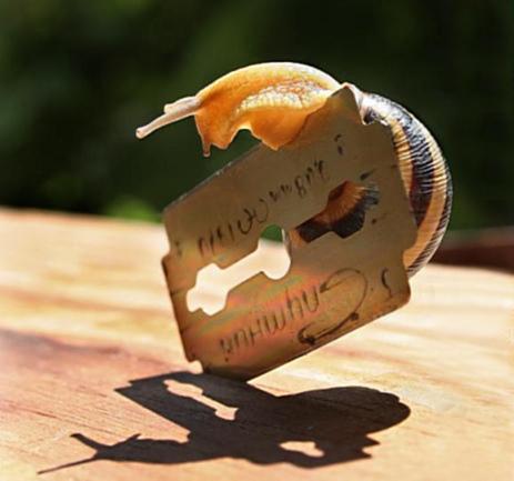 La adaptación evolutiva del caracol le permite hacer equilibrismos donde nosotros feneceríamos sin remedio.