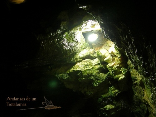 Algas en la Cueva del Tesoro.