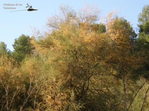 El otoño llega (por fin) a la Dehesilla.