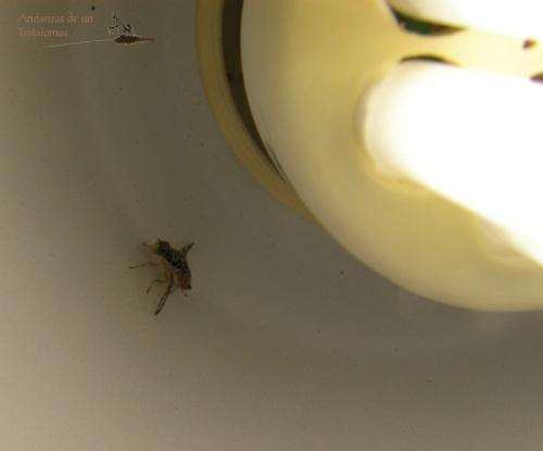 Nuestra mosca de la fruta parece gustar de la luz de la lámpara de estudio.