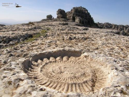 Ammonites en la cima