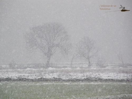 No todo es blanco o negro, es gris. Comienza a nevar en la Vega de Granada.