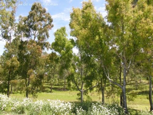 Zona de eucaliptos en el parque tecnológico.
