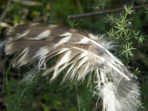 Detalle del plumaje.