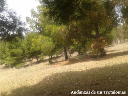 Entorno forestal en el PTA